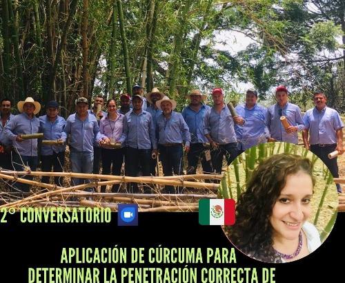 2° conversatorio,Cúrcuma para determinar la penetración correcta de preservantes en el Bambú