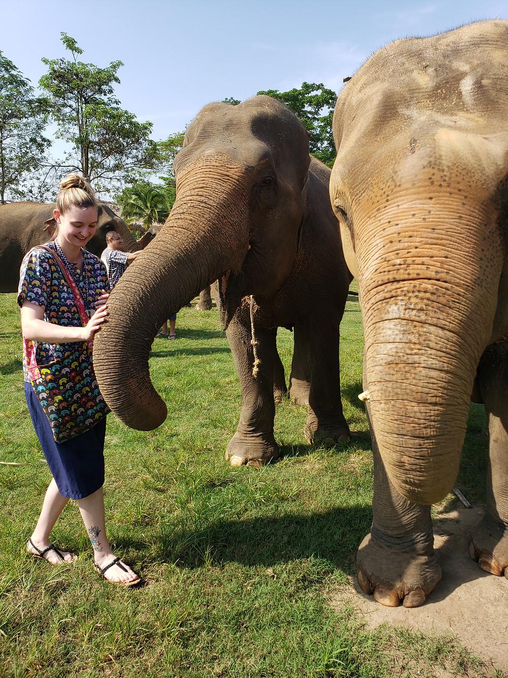 Elephants at Kanta Elephant Sanctuary, Chiang Mai, Thailand