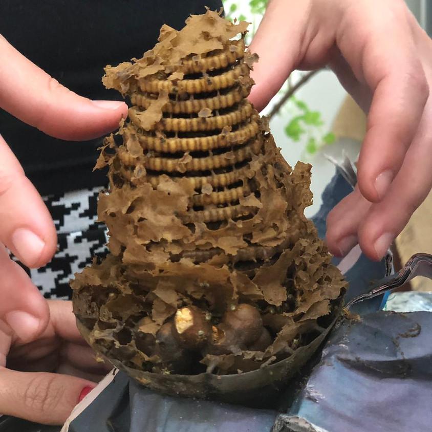 Quintal Polinizador: criando abelhas em casa (para adultos)