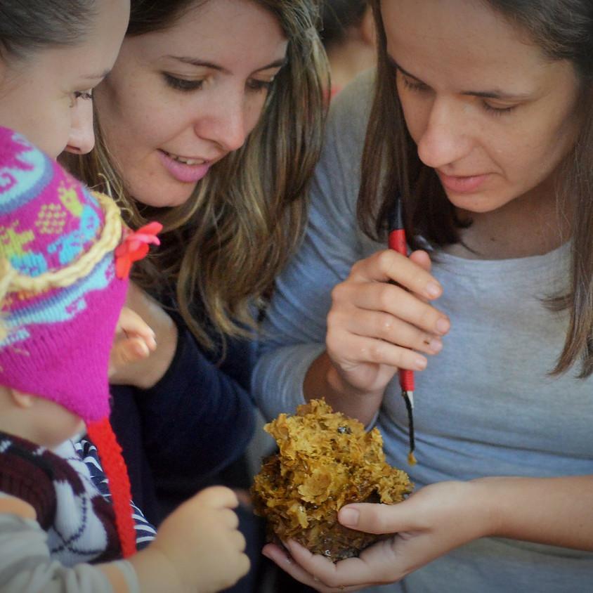 Quintal Polinizador: criando abelhas em casa (para crianças)