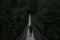 bridgeforest.jpg