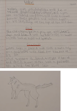 Hayden's amazing drawing!