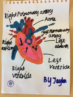 Jaylen - brilliant home learning!
