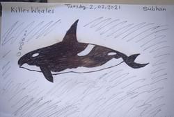 Subhan's wonderful drawing!