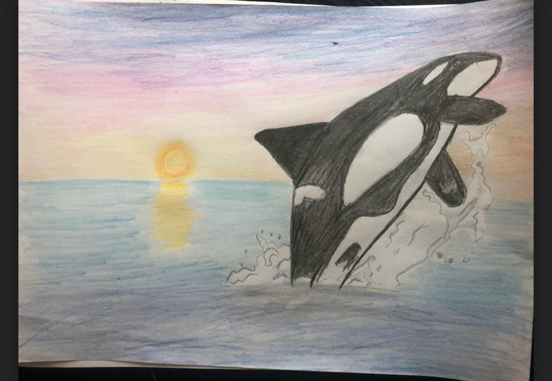 Lara's incredible Orca drawing!