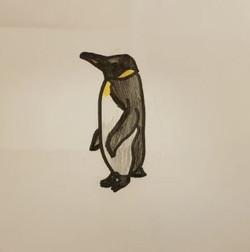 Eleni's brilliant penguin drawing!