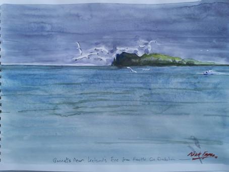 'Gannets near Ireland's Eye'