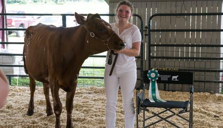 Cattle Dairy-7.jpg