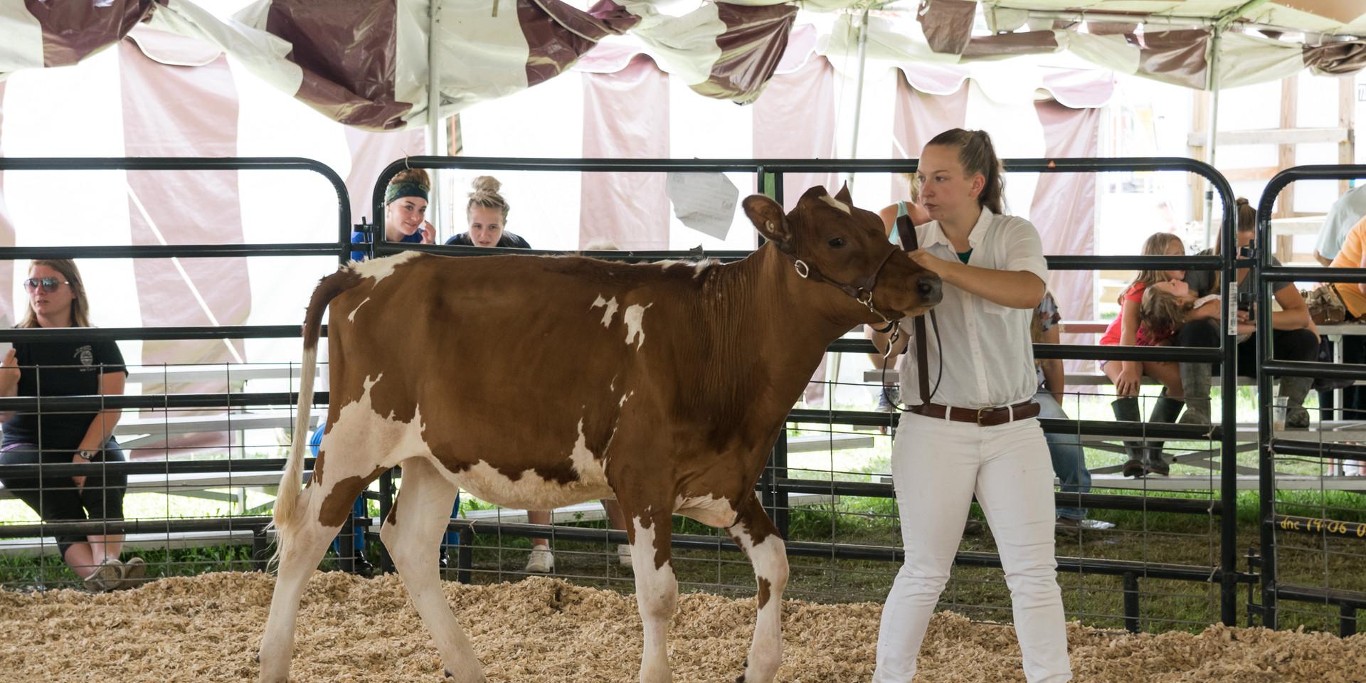 Cattle Dairy-9.jpg