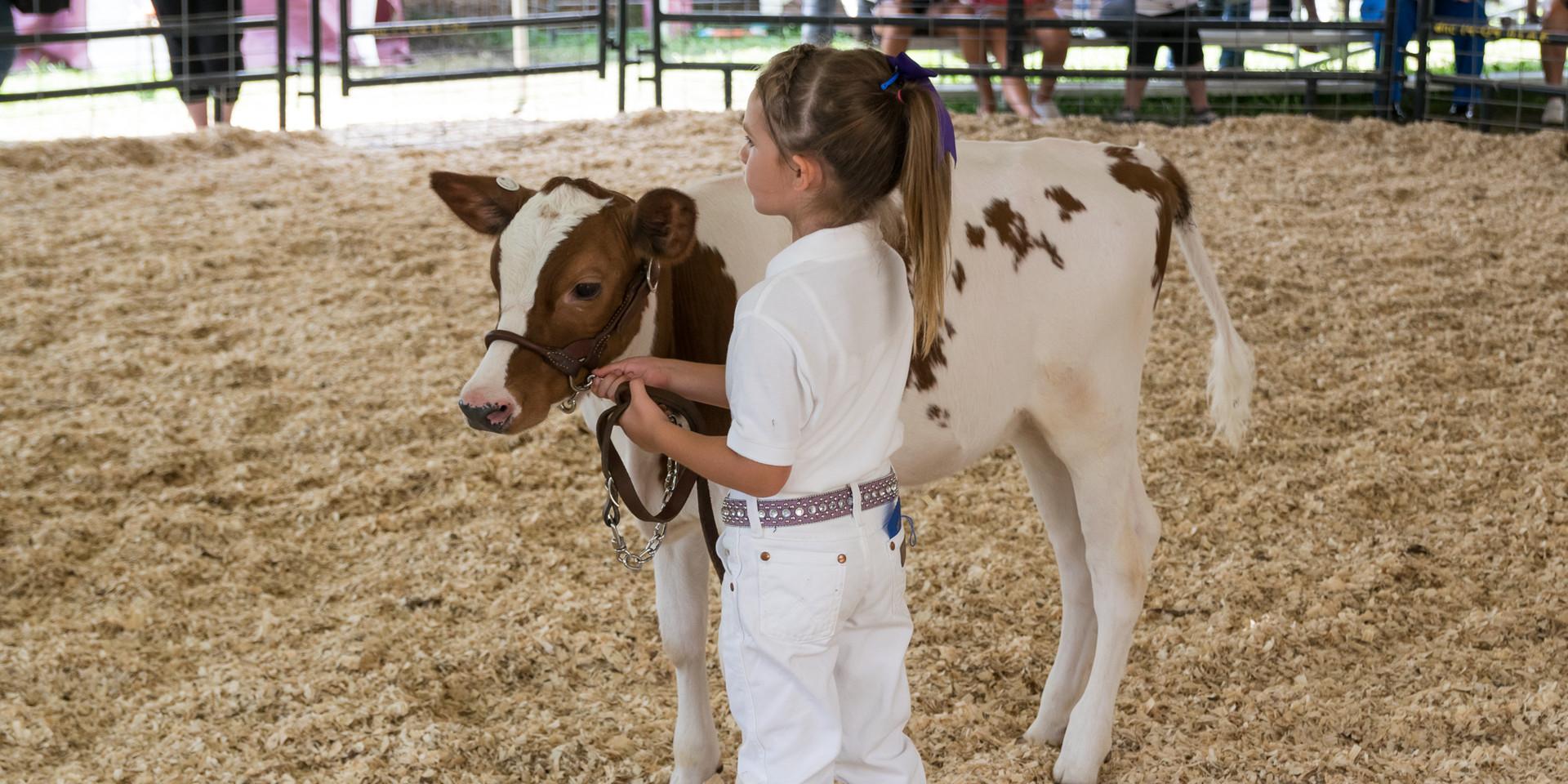 Cattle Dairy-8.jpg