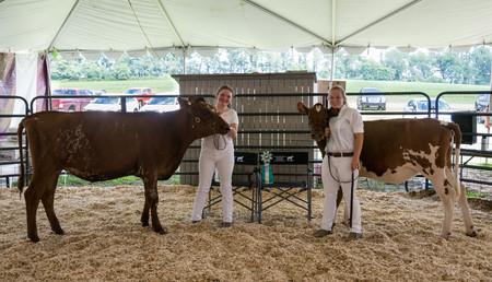 Cattle Dairy-5.jpg