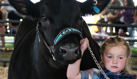Cattle Beef-3.jpg