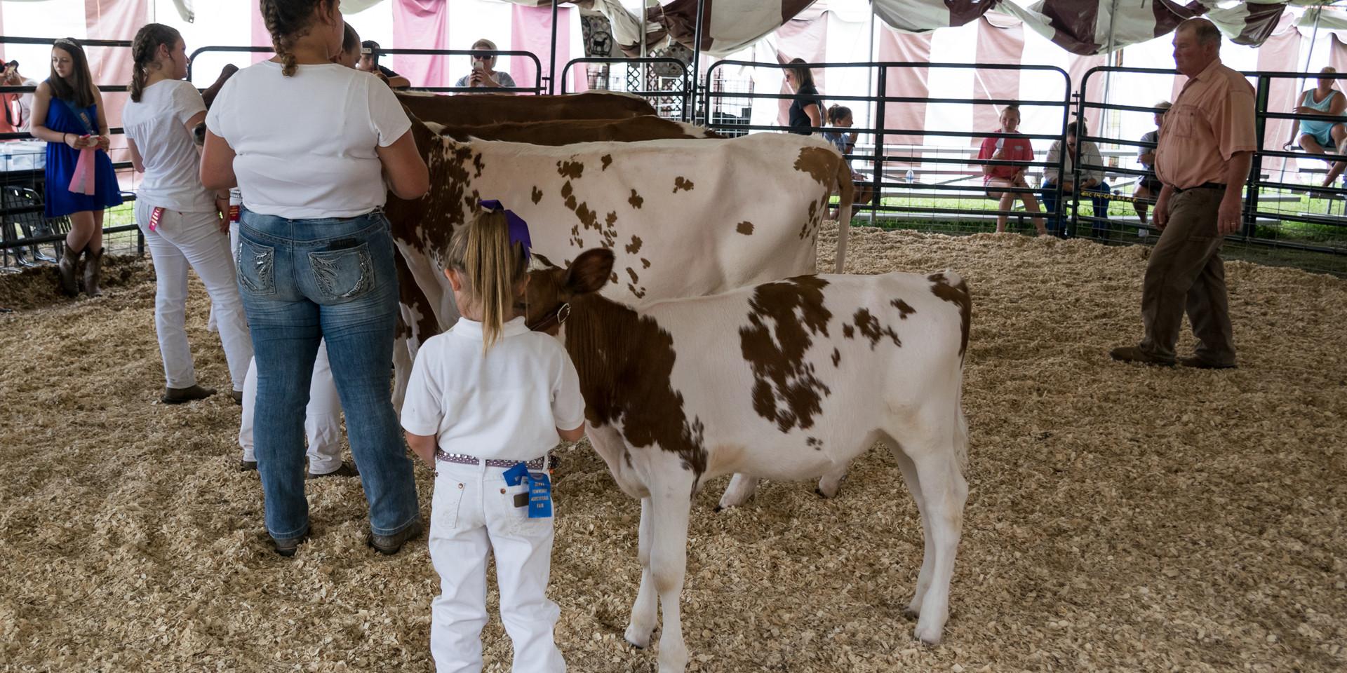 Cattle Dairy-10.jpg