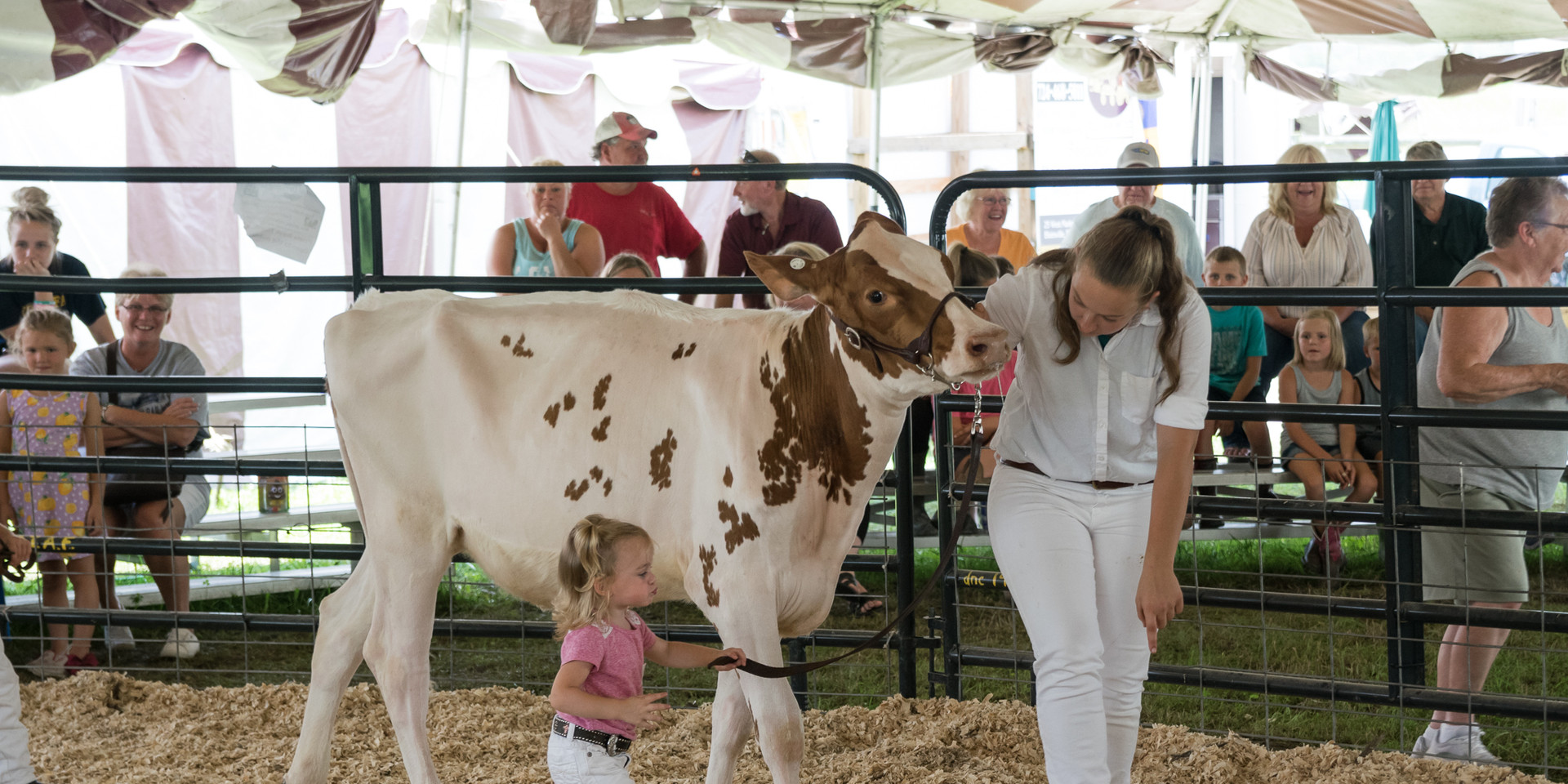 Cattle Dairy-1.jpg