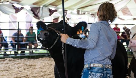 Cattle Beef-1.jpg