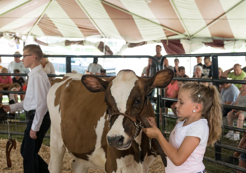 Cattle Dairy-2.jpg