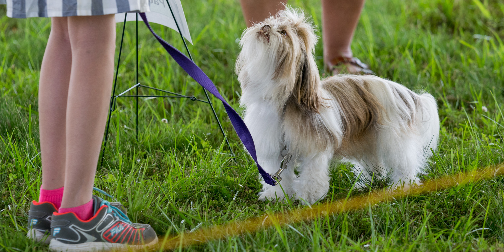 Dog Show-2.jpg