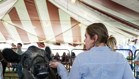 Cattle Beef-4.jpg