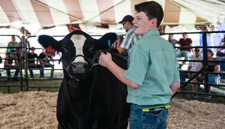 Cattle Beef-2.jpg