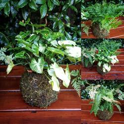 bespoke wedding prop hanging plants