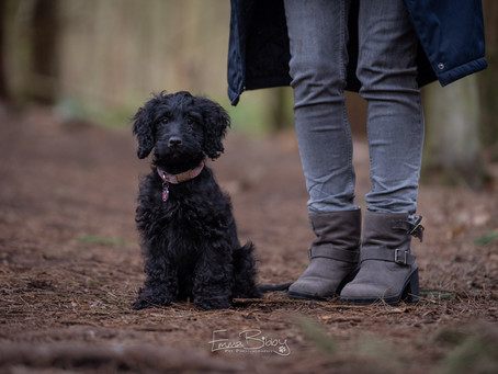 Puppy Session with Cleo the Cockerpoo