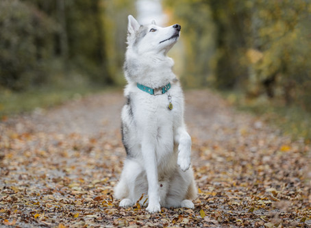 Dog Photography Myths #1: My dog cannot be off lead so I can't have a photoshoot
