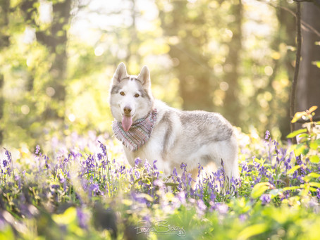 Top tips for taking stunning photos of your dog in flowers this Spring.