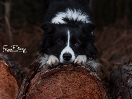 Things to consider when hiring a dog photographer