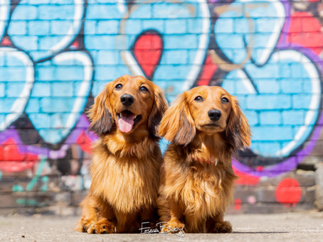 Meet my new Brand Reps: Cheddar & Chester