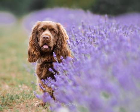 Hestia Lavender-1.jpg