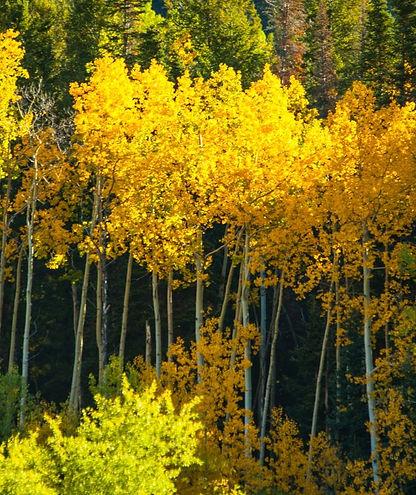 Month of Photography sponsor Colorado ph