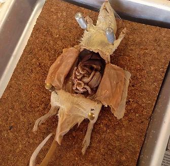 Rat Dissection_edited.JPG