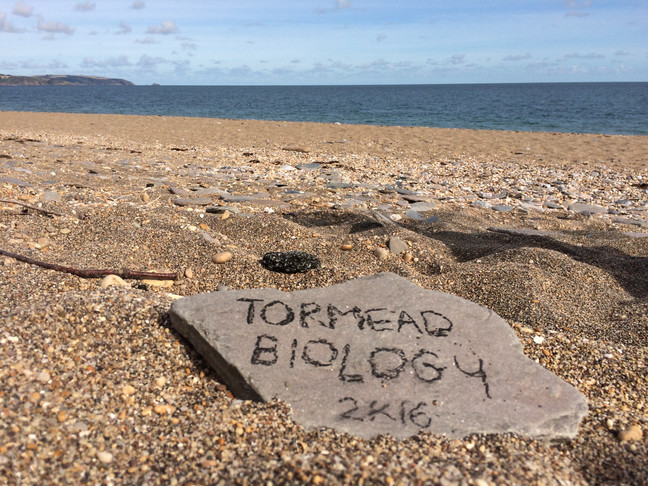 Back to the beach! - Upper 6th Field Study in Slapton Ley