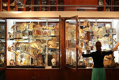 zoology main.jpg