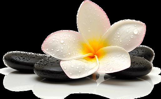 Fleur et pierre zen Tesnim Travel