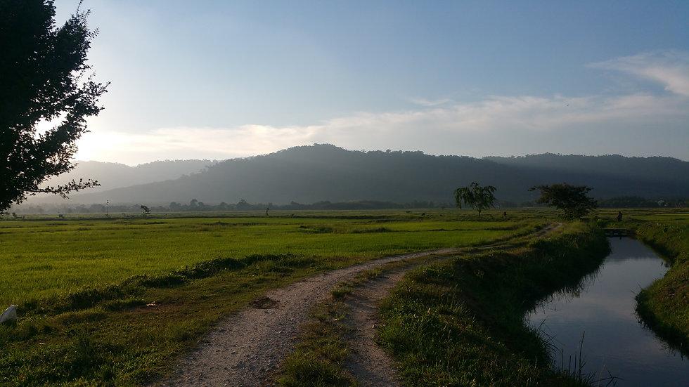 Rizières Ulu Melaka