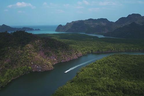 Mangrove tour bateau 1 heure