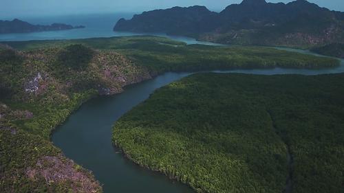 Mangrove Malaisie