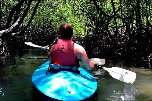 Mangrove tour Kayak adulte