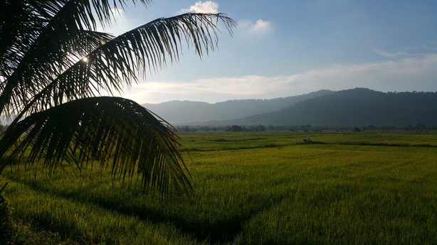Rizieres de Langkawi