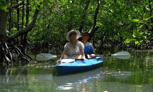 mangrove kayak trip 6-640.jpg