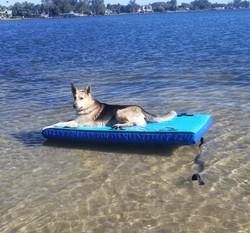 FLOAT-N-CHILL - DOG SWIM RAFT