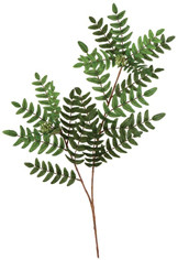 ACACIA LEAVES AND EASTER LILIES