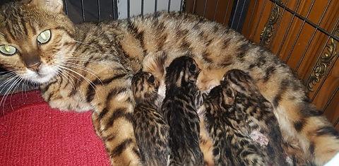 Lexie and June 2019 kittens_edited.jpg