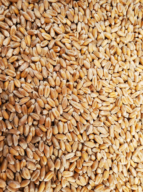 Organic Heritage Sirventa Wheat Berries