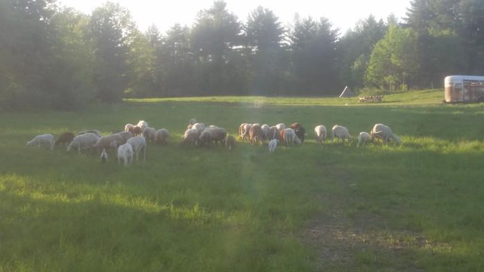 Farm update