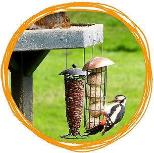 feedthebirds.jpg