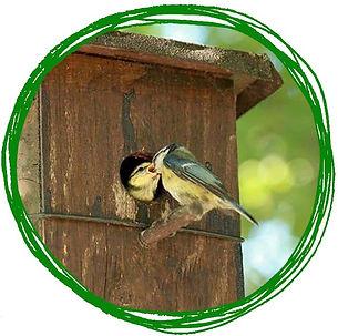 birdshome.jpg