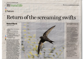 RETURN OF THE SCREAMING SWIFTS