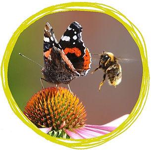 butterfliesandbees.jpg